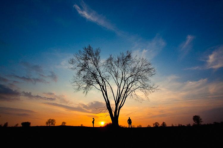 wpid2268-Tree-of-Life-1